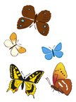 Moth,Wing,Collection,Set,Bl...