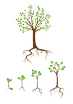 Root,Tree,Growth,Seedling,S...