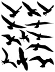 Bird,Silhouette,Seagull,Fly...