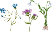 Thistle,Leaf,Flower,Petal,B...