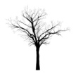Tree,Silhouette,Old,Vector,...