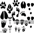 Shoe,Footprint,Animal Marki...