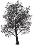 Tree,Vector,Branch,Leaf,Bla...