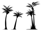 Palm Tree,Palm Leaf,Coconut...