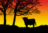 Highland Cattle,Cattle,Silh...