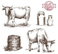 Cow,Ilustration,Grazing,Cat...