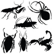 Silhouette,Insect,Back Lit,...