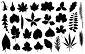 Computer Graphics,Symbol,Individuality,Variation,Nature,Botany,Composite Image,Design,Plant,Shape,Black Color,White Color,Cereal Plant,Tree,Uncultivated,Branch,Leaf,Season,Springtime,Summer,Grape,Wheat,Parsley,Maple Tree,Oak Tree,Silhouette,Acacia Tree,Birch Tree,Computer Graphic,Dandelion,Elm Tree,Willow Tree,Alder Tree,Aspen Tree,Clover,Cut Out,Cannabis Plant,Illustration,Organic,Group Of Objects,No People,Vector,Collection,Rowan Tree,Single Object,2015