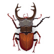 Stag Beetle,Characters,Envi...