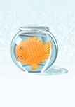 Fishbowl,Too Small,Confined...