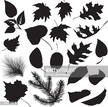 Black Color,Leaf,Deciduous ...