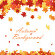 Orange Color,Season,Outdoors,Yellow,Design Element,Vector,Backgrounds,Leaf,Color Image,Plant,Bright,Lush Foliage,Abstract,Part Of,Maple Tree,Gold Colored,Decoration,Botany,Floral Pattern,Pattern,Autumn,October,Vibrant Color,Bush,Colors,Branch - Plant Part,Forest,Illustration,Design,Beauty In Nature,Beauty,Brown,Falling,Ornate,Blank,September,Nature,Red,Tree,2015,Elegance,Copy Space,Frame - Border