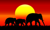 Africa,Background,Animal Wi...
