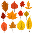 Set of twelve colorful autumn leaves in warm colours.