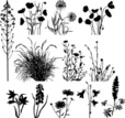 Environmental Conservation,Grass,White Background,Chrysanthemum,Social Issues,Lupine,Natural Pattern,Season,Cut Out,Ornamental Garden,Poppy - Plant,Single Flower,Design Element,Vector,Leaf,Growth,Plant,Herbal Medicine,Uncultivated,Dahlia,Bluebell,Flower,Onion,Blossom,Aster,Silhouette,Summer,Decoration,Botany,Group Of Objects,Floral Pattern,Dandelion,Ayurveda,Organic,Bush,Wild Leek,Illustration,Environment,Lily,Beauty In Nature,Iris - Plant,Chamomile Plant,Nature,2015,No People,Herb,Springtime