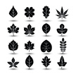 Abstract,Leaving,No People,Plant,Collection,Summer,Illustration,Nature,Shape,Leaf,Icon Set,Computer Icon,Symbol,2015,Elm Tree,Environment,Maple Tree,Social Issues,Environmental Conservation,Tree,Vector,Design,Pattern