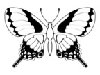 White Background,Insect,Bla...