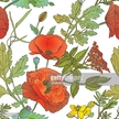 Flower,Plant,Poppy,Variatio...