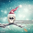 Holiday - Event,Snow,Blurre...