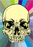 Human Skull,Vector,The Huma...