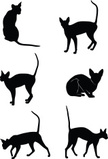 Domestic Cat,Pets,Outline,M...