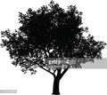 The silhouette of a big tree with a white background
