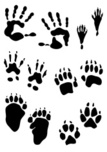 Animal,Footprint,Paw,Human ...