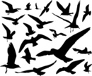 Seagull,Bird,Silhouette,Fly...