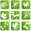 Leaf,Tropical Climate,Plant...