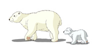 Polar Bear,Bear,Wildlife,An...