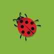 No People,Insect,Ladybug,Il...