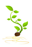 Seed,Growth,Bud,Cultivated,...