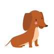 Pets,Canine,Animal,Vector,Dog Food,Puppy,Match - Sport,Animal Hospital,Computer Graphic,Sitting,Pet Shop,Cute,Illustration,Friendly Match,Brown,Ornate,Collection,Dog,Purebred Dog,Dachshund,Small