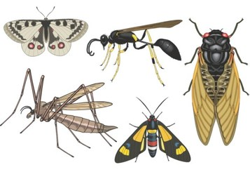 Realistic insect