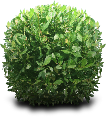 bushes PSD
