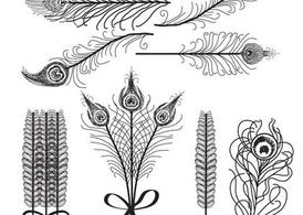 Vector Feathers Birds of Paradise White and Black