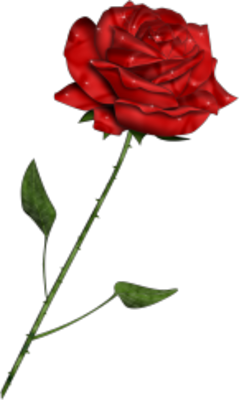 Red Rose PSD