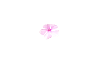 Small Pink Flower Silhouette Improved