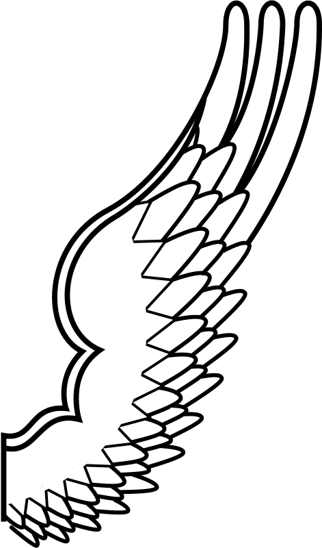 Archaic drawing of a bird wing