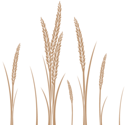 Ear of Wheat Vector Art Free