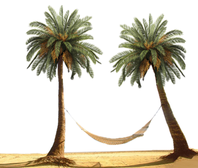 Palm Tress & Hammock PSD