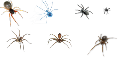 Spiders PSD