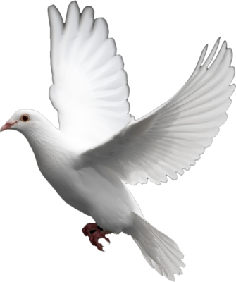 White Dove PSD