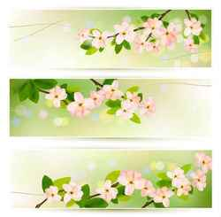 flower green banner background