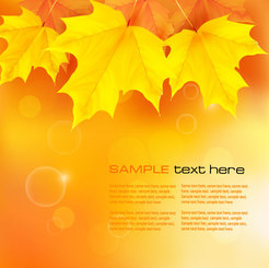 Beautiful maple leaf background vector-2