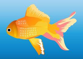 Goldfish Graphics