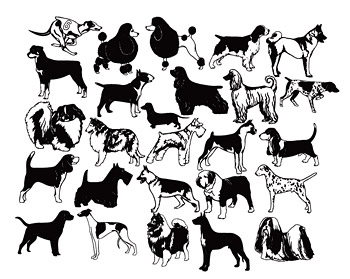 A variety of black and white dog dog