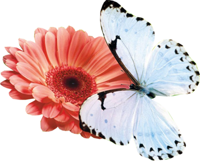 Flower and Butterfly PSD
