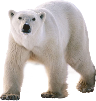 Polar Bear PSD