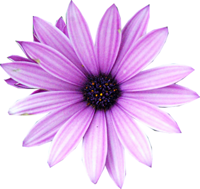 Free Purple Flower Psd Vector Graphic Vectorhq Com